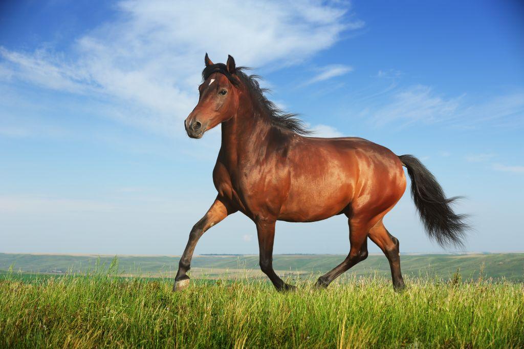 http://n.ziyouz.com/images/horse.jpg